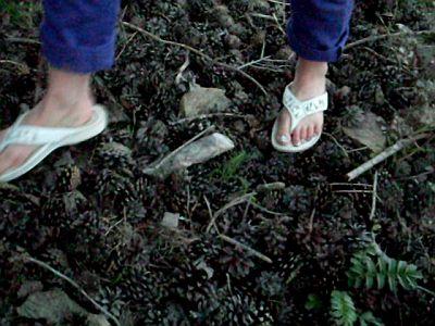 43222 - Flip Flops Vs Pine Cones