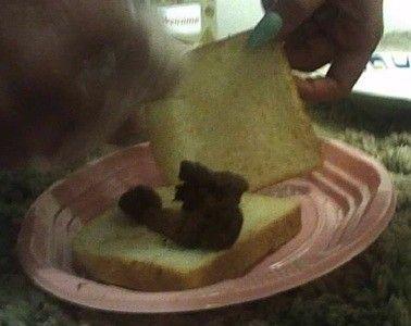 90208 - CHIARA - second attempt -breakfast scat