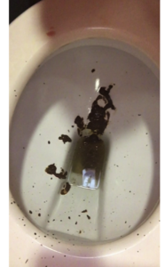 58529 - Diarrhea Explosion at the Shopping Center Toilet
