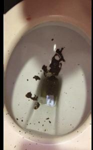 58529 - Diarrhea Explosion at the Shopping Center Toilet